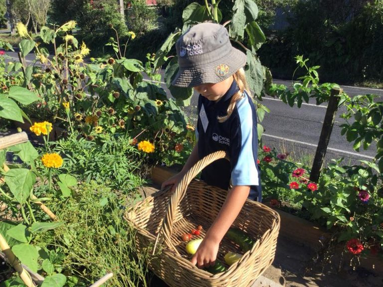 The garden to table programme – a need to sow the seed
